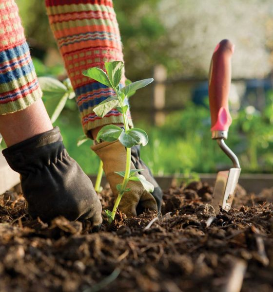 gradina legume nuoricum.ro